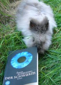 Grey dwarf rabbit is trying to eat book