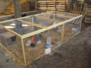 Rabbit enclosures from wire mesh panels